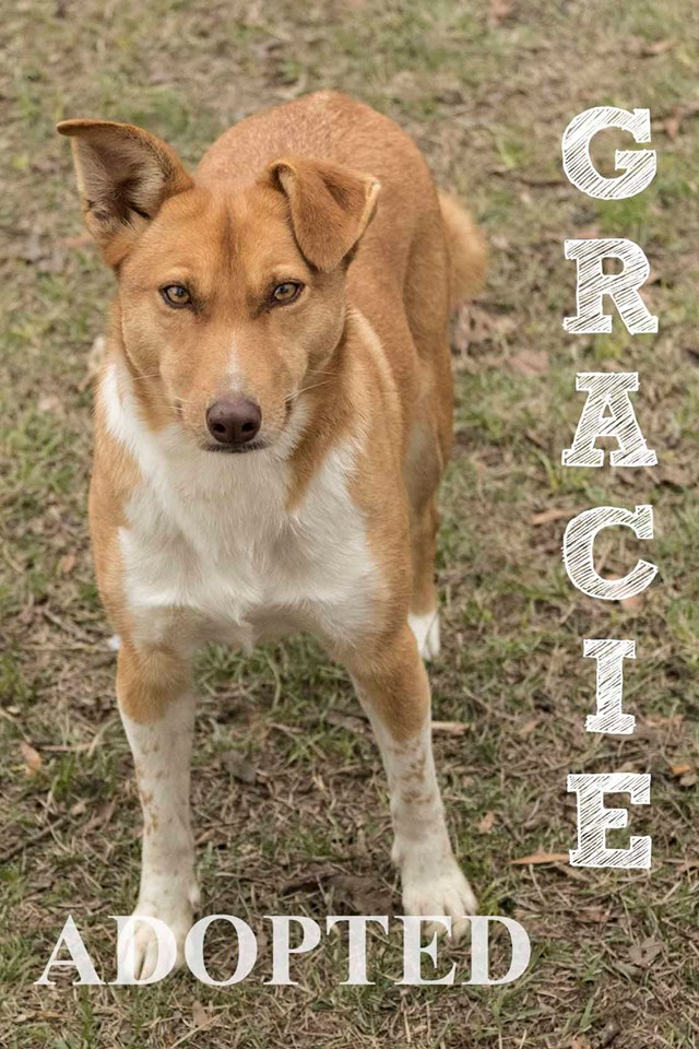 gracieAdopted
