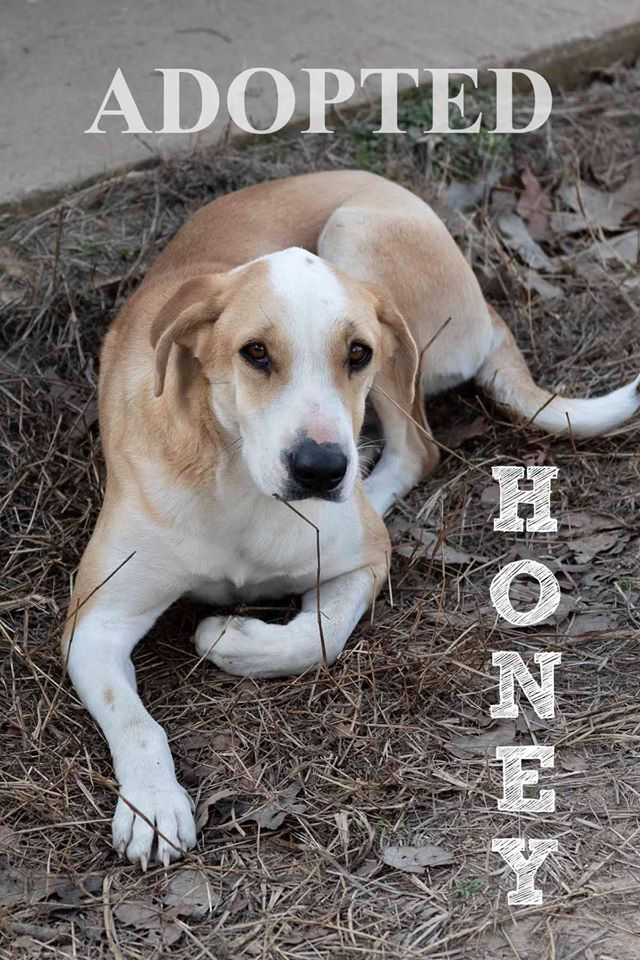 honeyAdopted