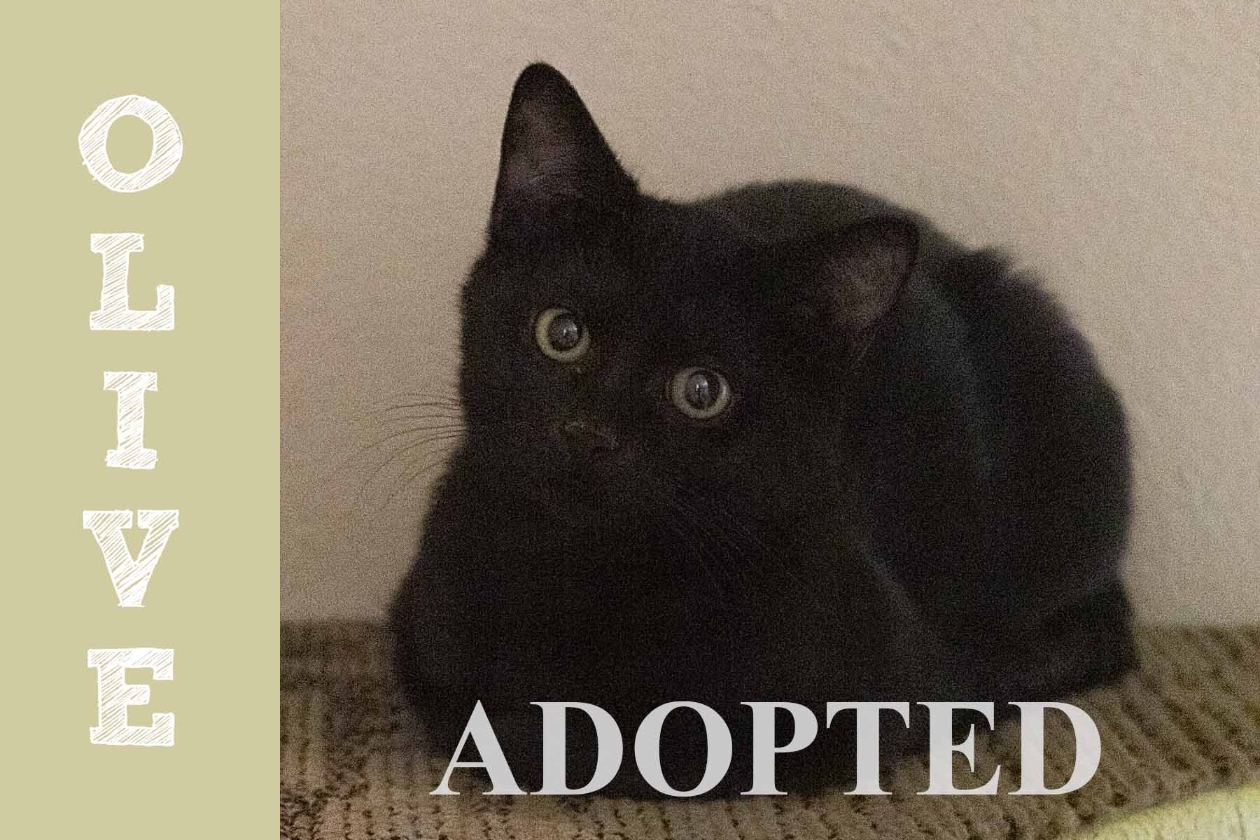 oliveAdopted