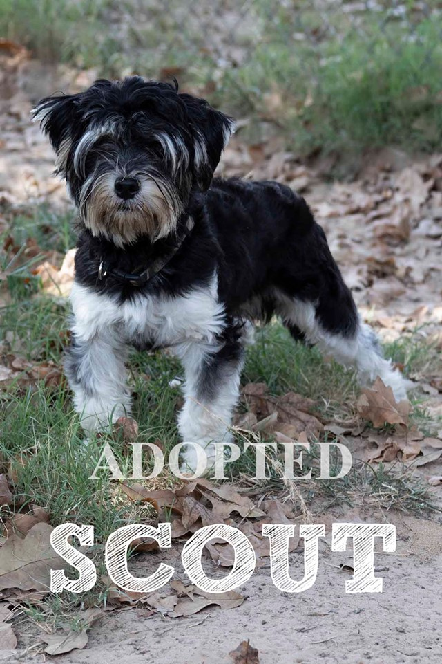scoutAdopted