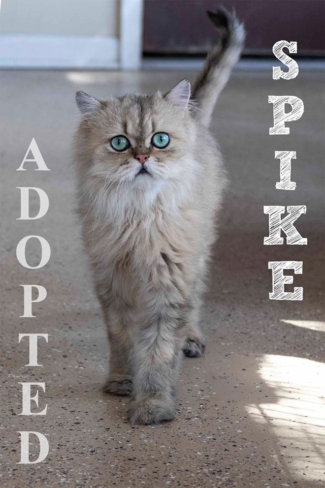 spikeAdopted