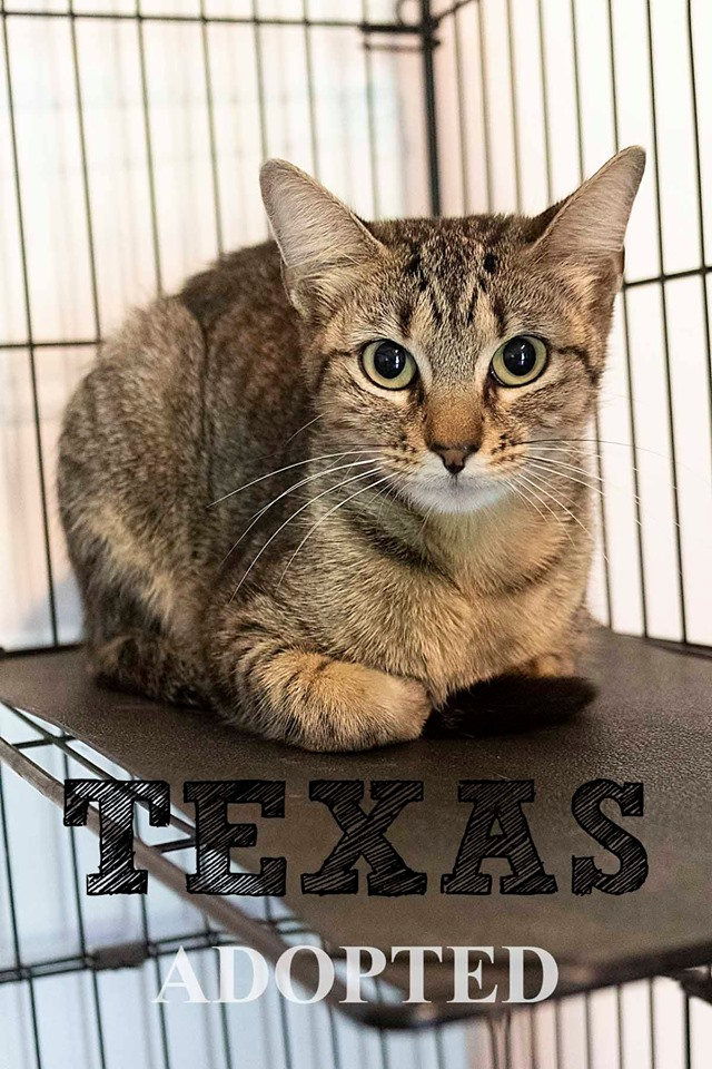 texasAdopted